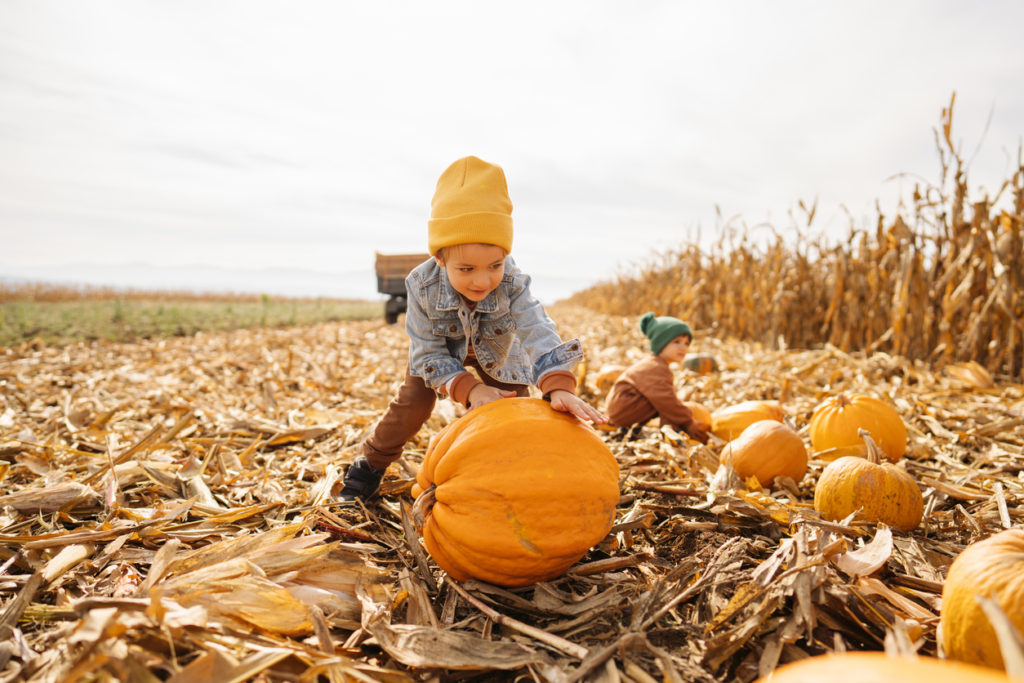 Little boys collecting pumpkins