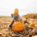 Know Before You Go: How To Find The Best Pumpkin